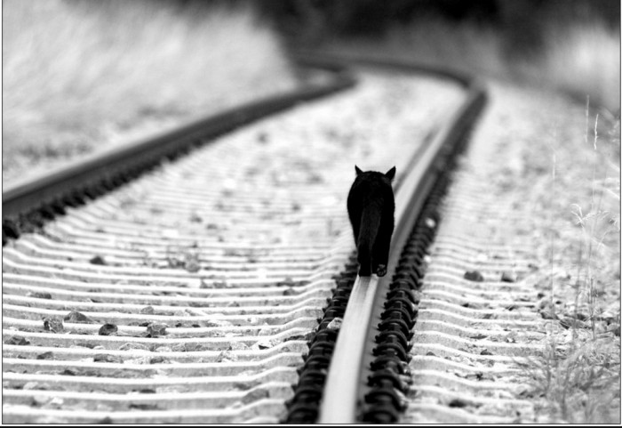 cat on a rail