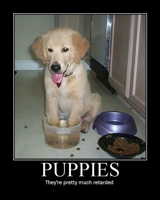 puppies - they're pretty much retarded