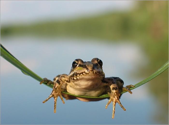 froggy leaf