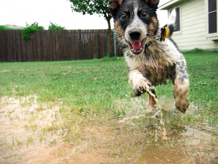 wet happy dog