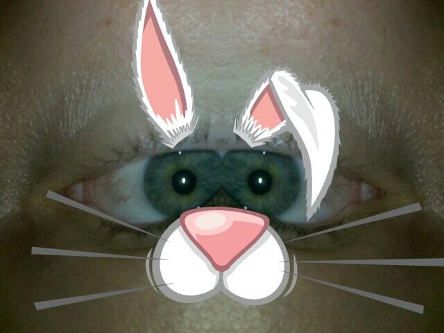 funny rabbit 2