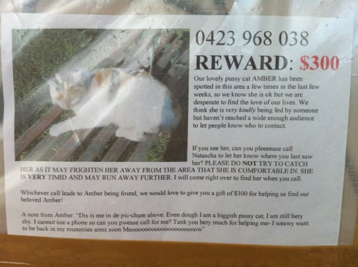 stupid cat reward 700x522 stupid cat reward