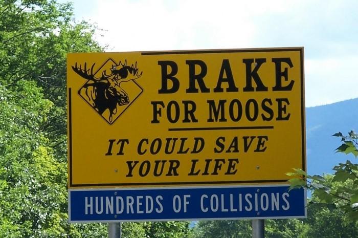 break for moose