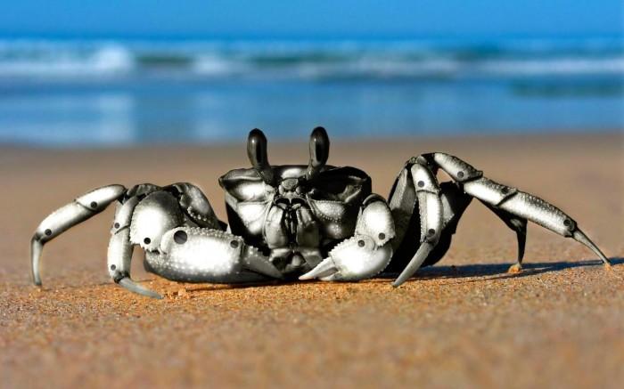 cyber crab