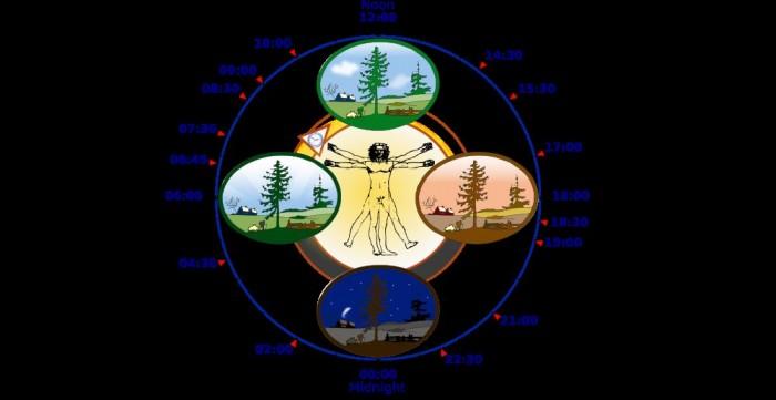 human biological clock