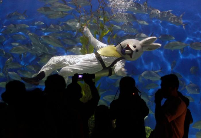 rabbit diver 700x482 rabbit diver wtf aquariums