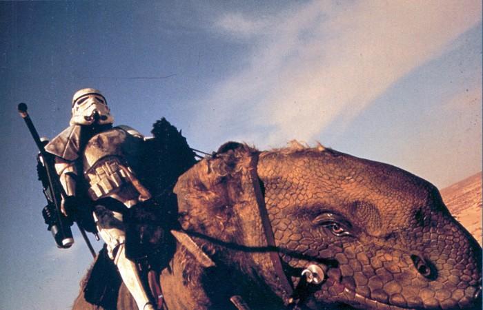 storm trooper on lizard 700x450 storm trooper on lizard Wallpaper star wars Movies