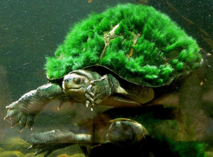 turtle and algae relationship quizzes