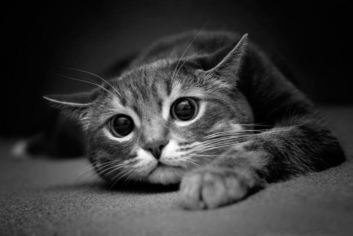 desperate cat
