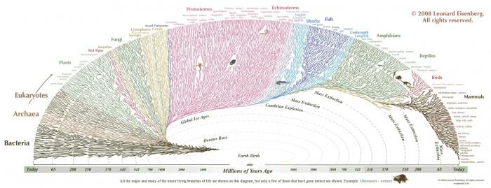 evolutionary tree