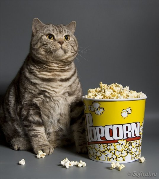 fat cat with popcorn