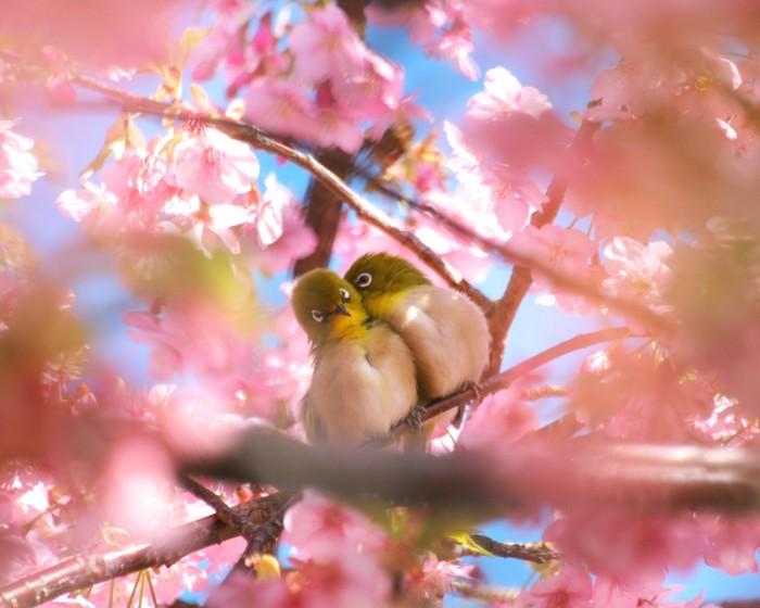lover birds