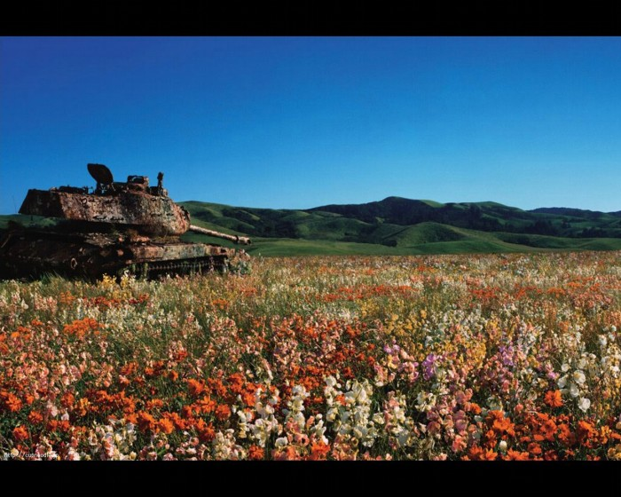 rusty tank in field of flowers