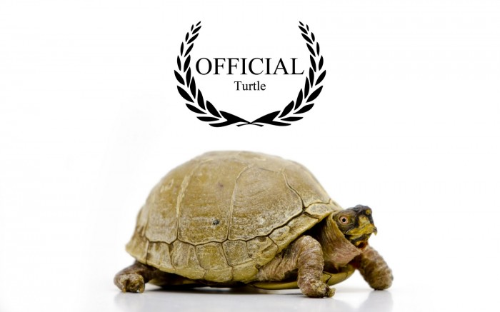 official turtle