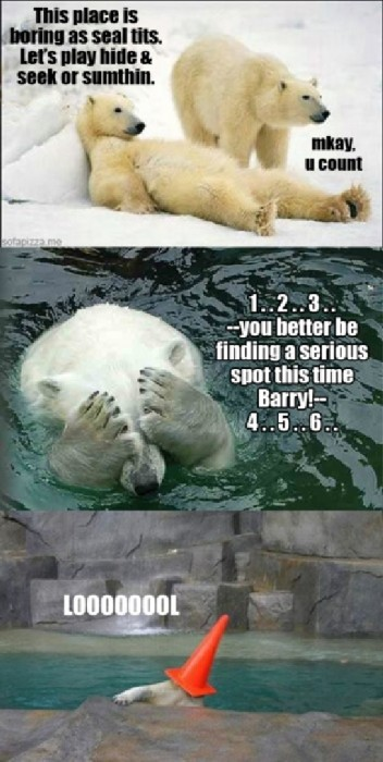 polar bear hide and seek