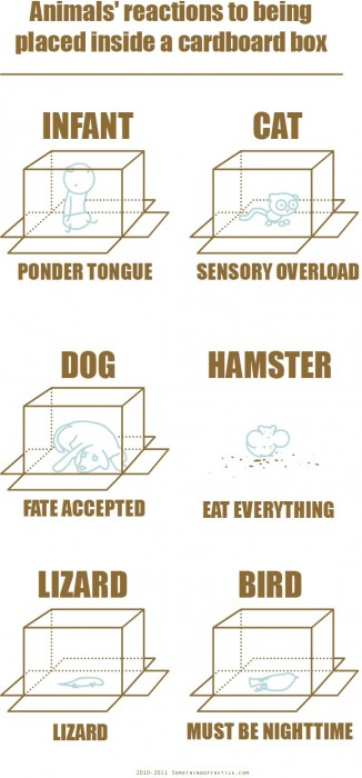 animals reactions to being placed inside a cardboard box