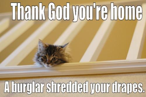 a burglar shredded your drapes