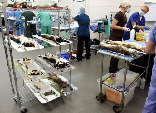 cat assembly line