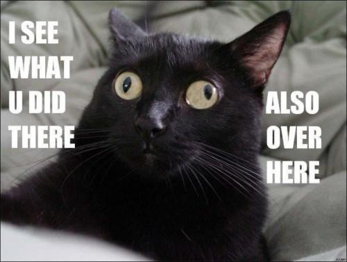 cat derp 500x377 cat derp lolcats Humor