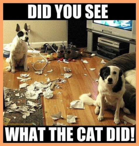 did you see what the cat did 475x500 did you see what the cat did