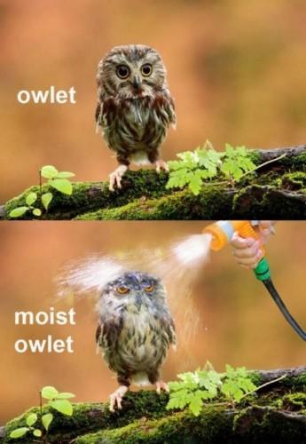 moist owlet 345x500 moist owlet Humor