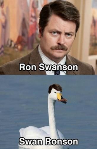 ron swanson vs swan ronson 328x500 ron swanson vs swan ronson ron swanson Humor