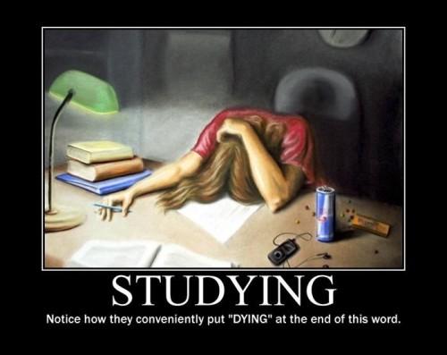 studying 500x397 studying school Humor