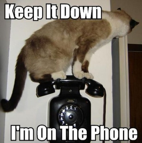 cat-on-the-phone