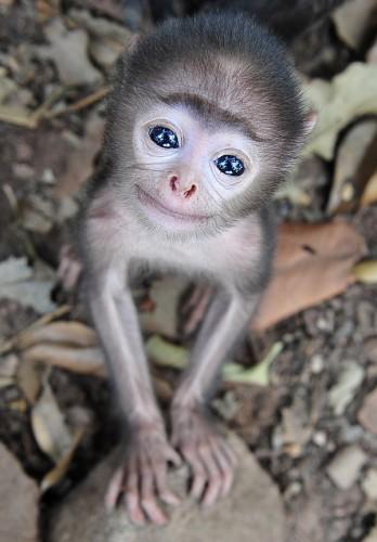 glassey eyed monkey