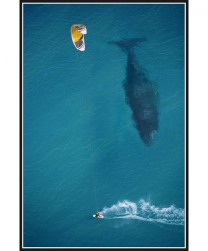 kite surfing with humpback whale below by Michael Swaine