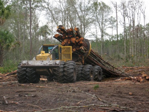 massive tree machine