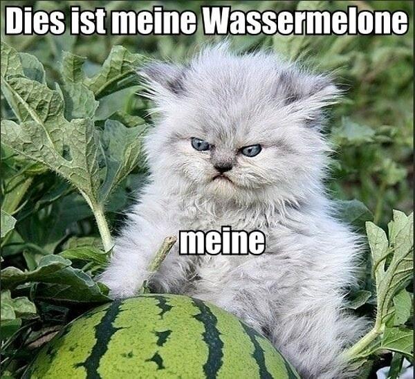 Dies ist meine wassermelone, meine.jpg