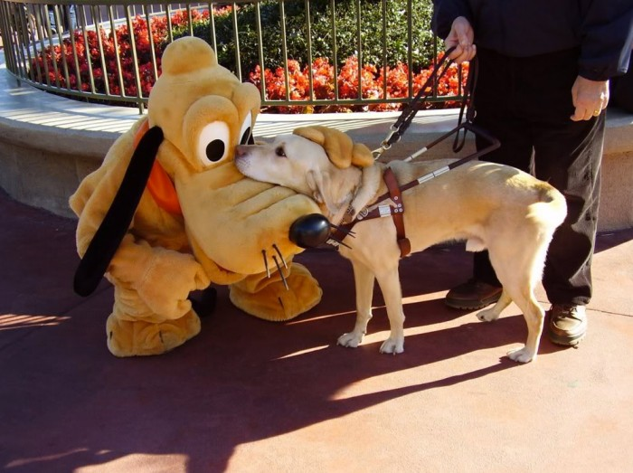 Pluto and service dog.jpg