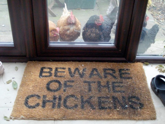 beware of the chickens.jpg