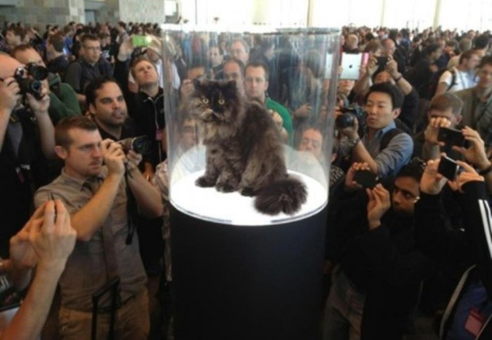 fancy cat is famous.jpg