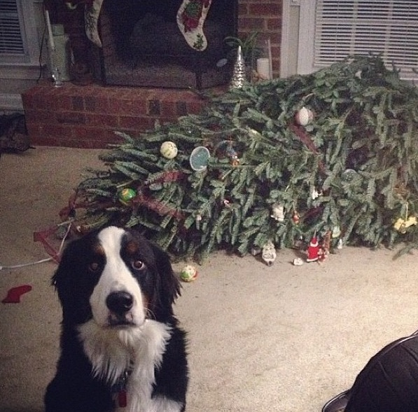 xmas tree vs dog