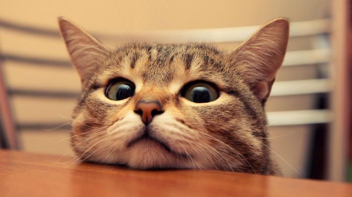 hungry cat.jpg