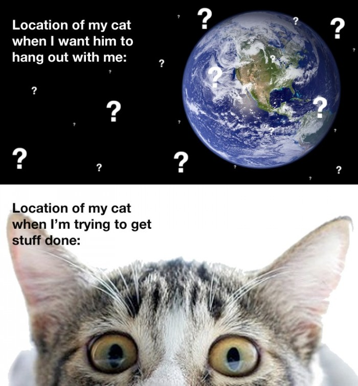 location of my cat.jpg