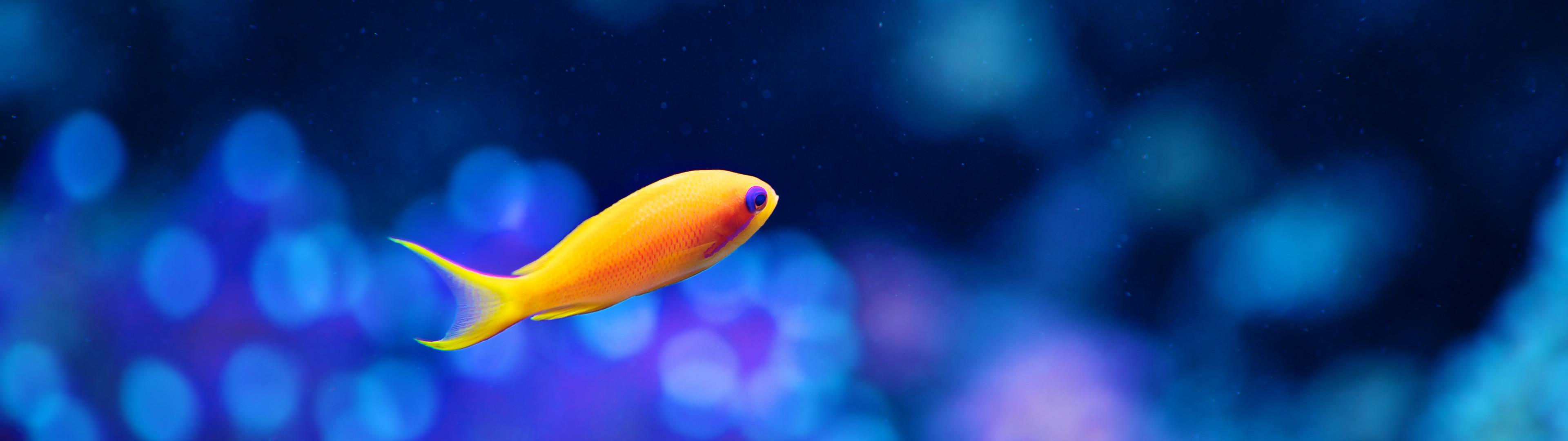 neon fish.jpg