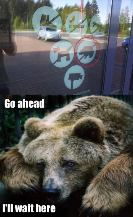 no bears.jpg