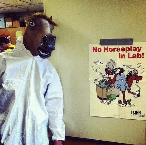 no horseplay in lab.jpg