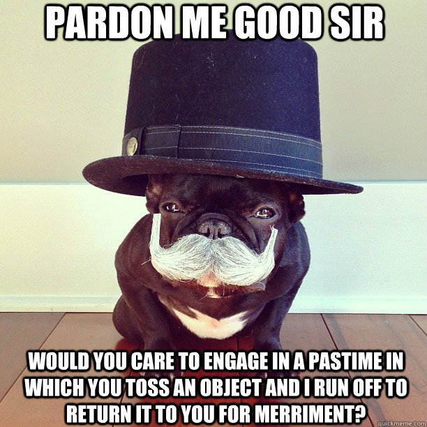 pardon me good sir dog pastime pardon me good sir   dog pastime Humor Cute As Hell Animals