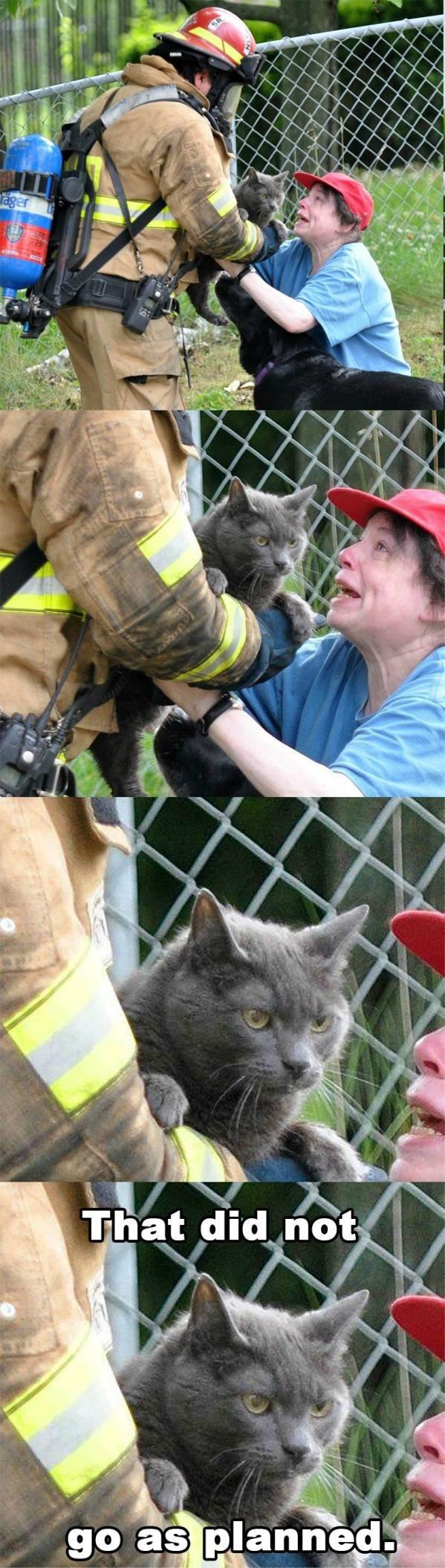 pyro kitty.jpg