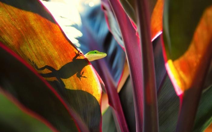 shadow lizard.jpg