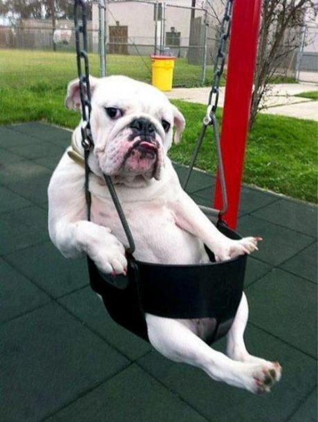 swing dog.jpg