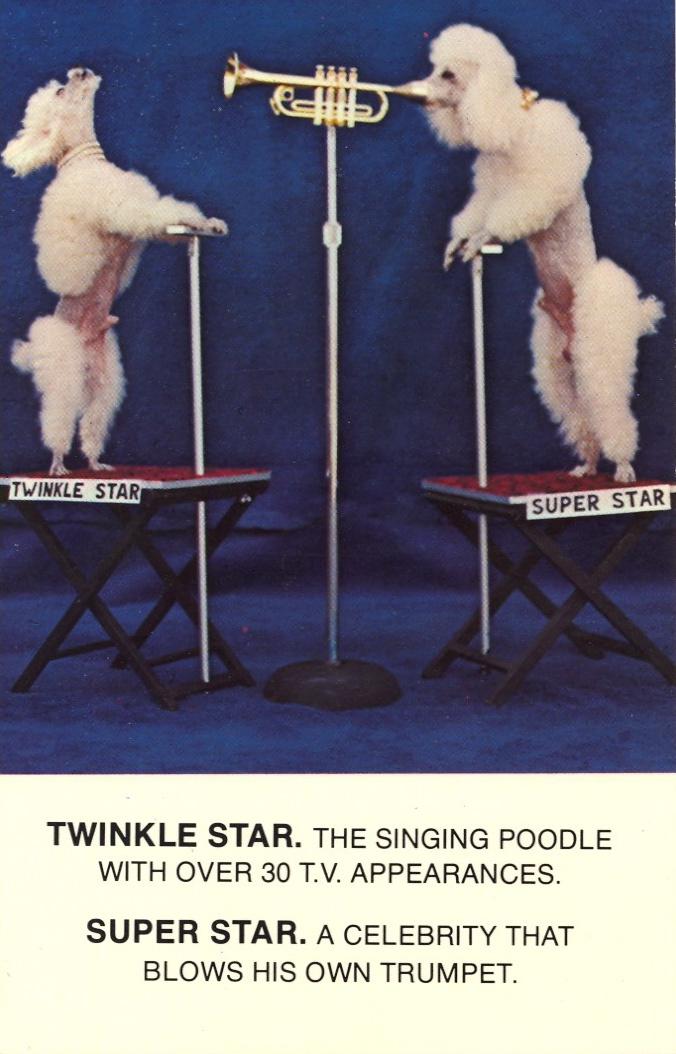 twinkle star twinkle star wtf Music