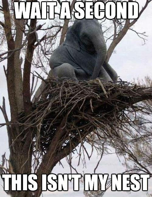 wait a second, this isnt my nest.jpg
