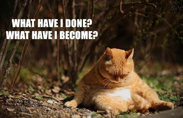 what have I done what have I become what have I done, what have I become Sad :( lolcats