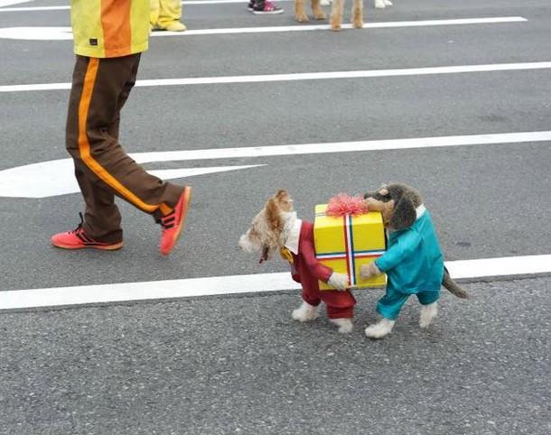 xmas dogs.jpg