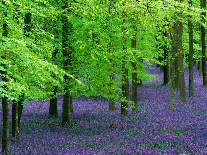 purple and green forest.jpg